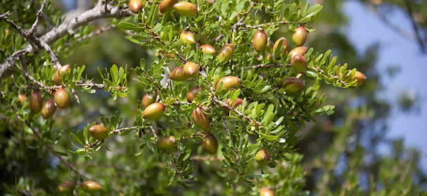 Jak stosować olejek arganowy?